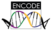 ENCODE Data at UCSC